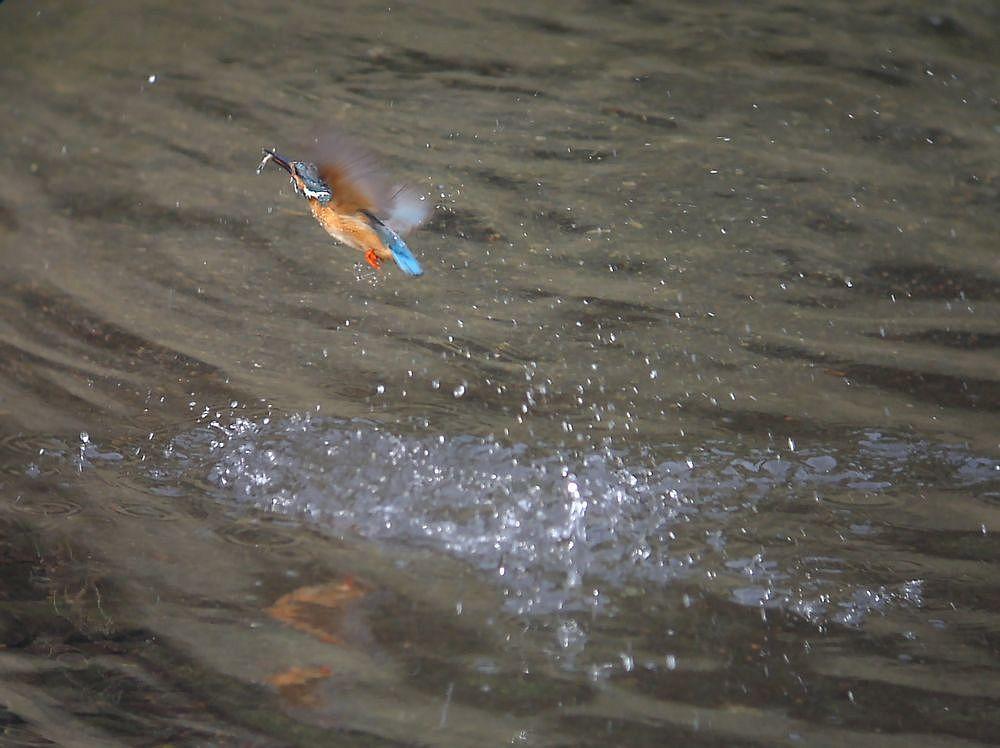 水中からの飛び上がり